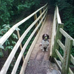 New bridge over Lambley Dumbles